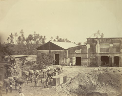 Camperdown Pressing Coy. - Calcutta 355166
